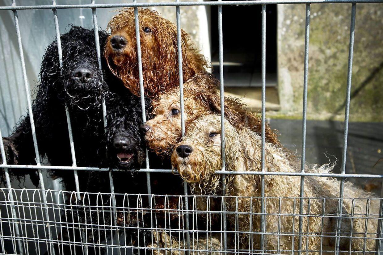 Hundene på billedet stammer fra en anden dyreværnssag. Arkivfoto.