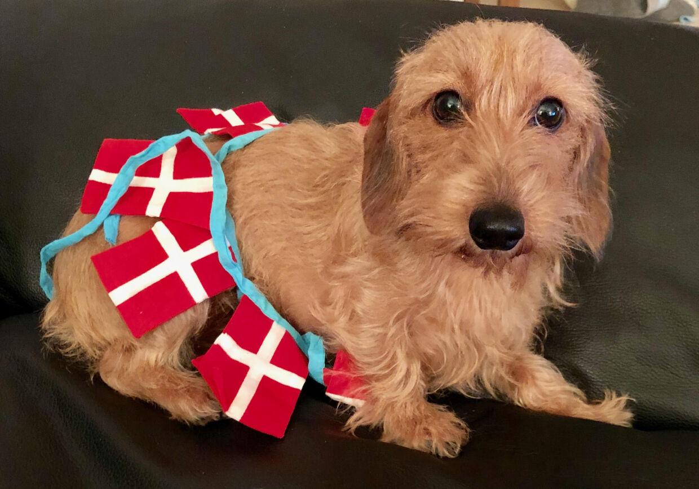 Tina Boviens hund er helt klar til EM!