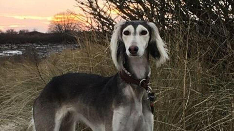 Hunden Mella var en af de hunde, der døde efter en tur på stranden i sensommeren 2020.