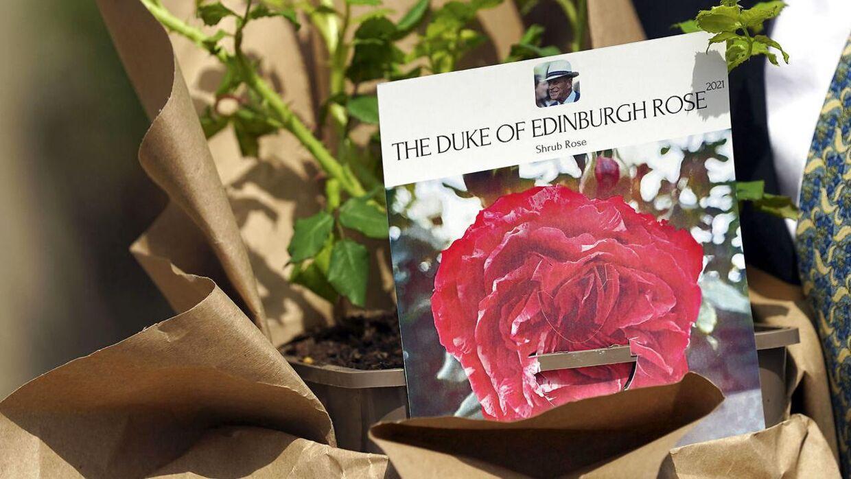 Den nyopdrættede rosesort blev skænket til dronning Elizabeth af Keith Weed, der er præsidenten for velgørenhedsorganisationen The Royal Horticultural Society.