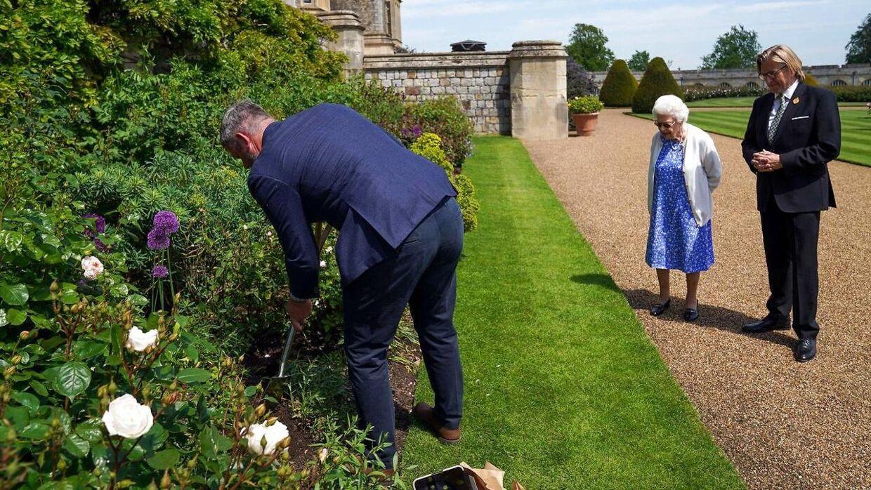 Dronning Elizabeth så på, mens Windsor Castles hovedgartner, Philip Carter, plantede prinsens særlige rose i det kongelige rosenbed.