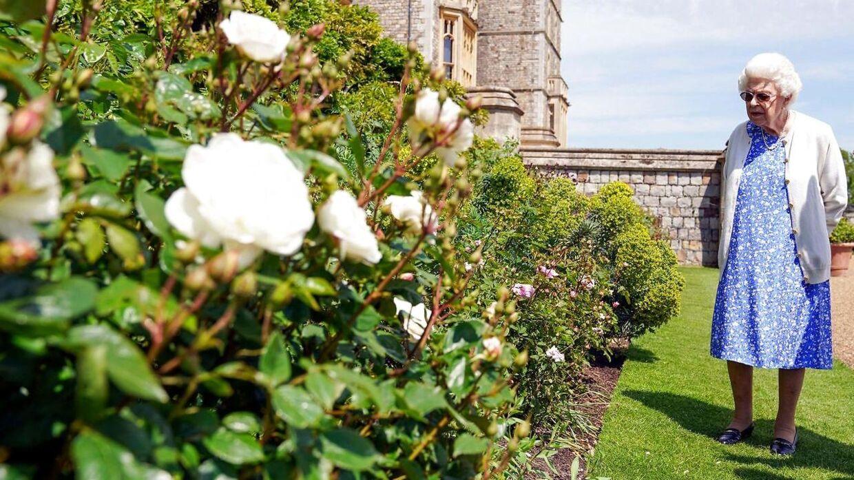 Den nyopdrættede hertug af Edinburgh-rose har fået plads blandt de mange roser i det kongelige rosenbed. Den særlige roseart til ære for den afdøde prins er pink og overskuddet fra salget af den går til prins Philips fond.