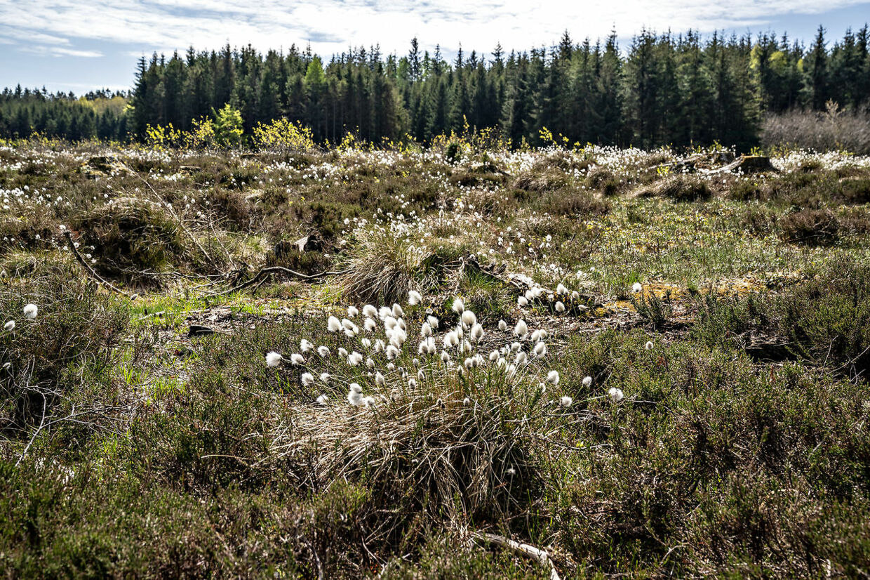 Vi skal have meget mere af det her, hvis det står til Enhedslisten. Faktisk skal vi have et areal på størrelse med Fyn plus tre gange Bornholm med græs, skov og uberørt natur inden 2030.