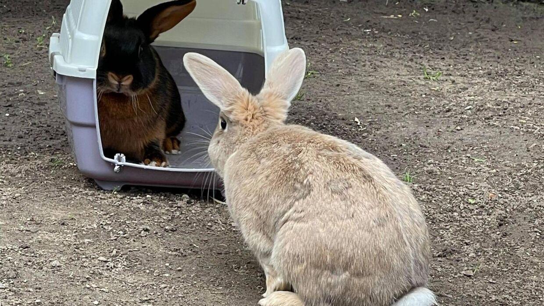 Kaninerne Mads, den lyse kanin, og hun kaninen, der ikke nåede at blive navngivet, før hun døde.