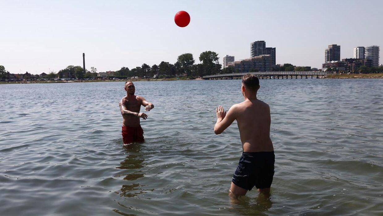 Amarkanere i Amager Strandpark fredag den 18. juni 2021.