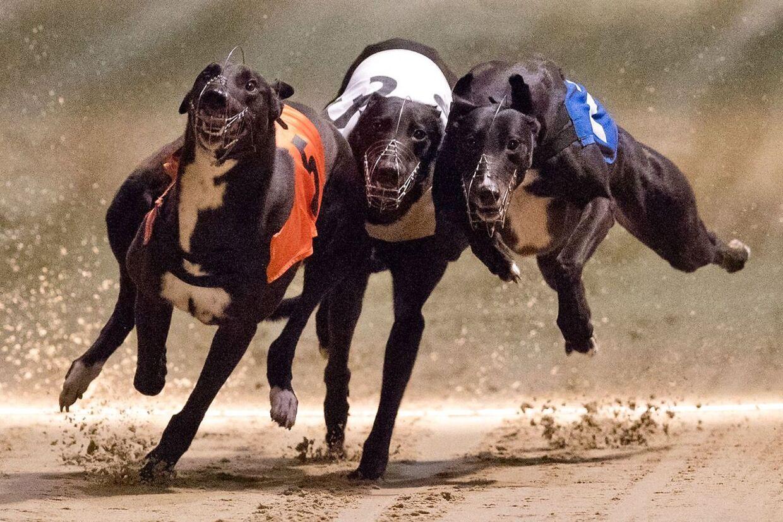 Der er næsten ingen hundevæddeløbsbaner tilbage. Engang var hundevæddeløb en integreret del af livet i London.