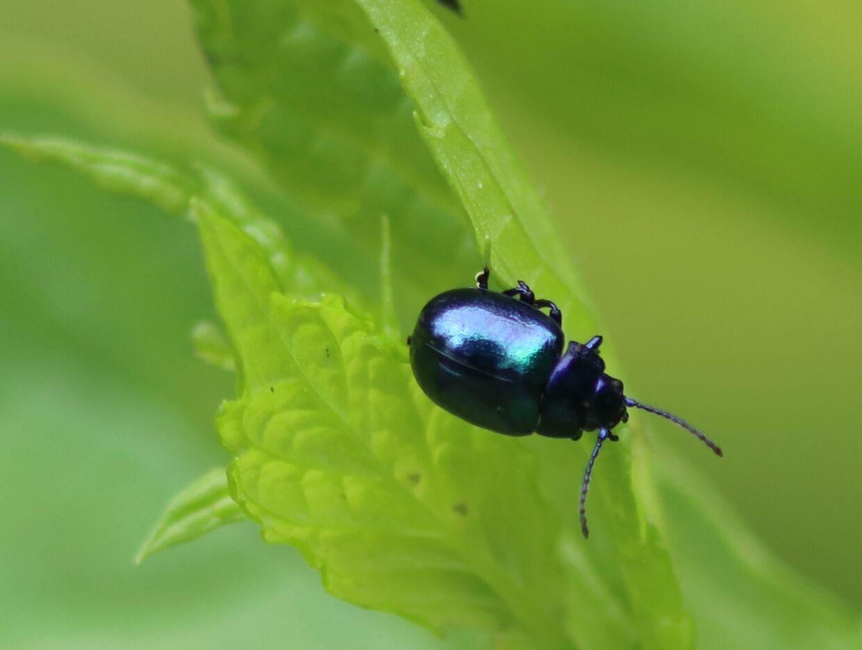 Et billede af billen