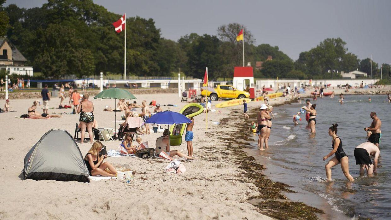 23 grader, så varmt er badevandet på Bellevue Strand netop nu.