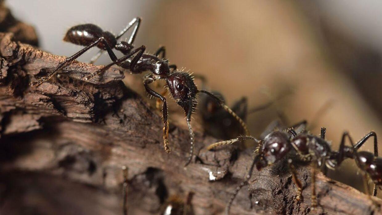 Har du problemer med myre i år?