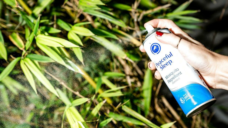 Renseanlægget kan ikke bruge kemikalier til at fjerne kloakfluerne.