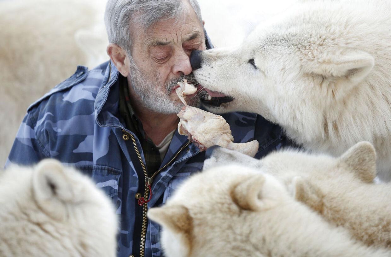 Werner Freund i sin ulvepark i Merzig, Tyskland. I mere end 40 år har den tyske 'Ulvemand' dedikeret sit liv til at opfostre ulvene og leve iblandt dem.