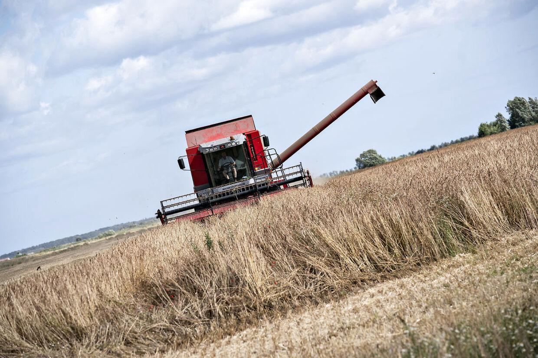 En mejetærsker er igang med med at høste spelt på en mark ved Nørkær øst for Aalborg, tirsdag 3. august.