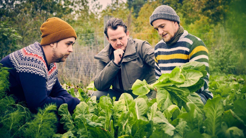 Simon Kvist Bjerre (i midten) på Alimentums økologiske landbrug.