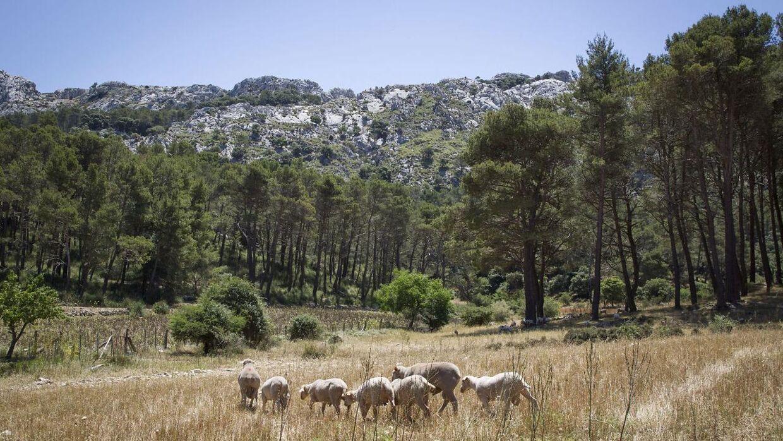 To unge er omkommet i en klatreulykke på det sydøstlige Mallorca. Arkivfoto.