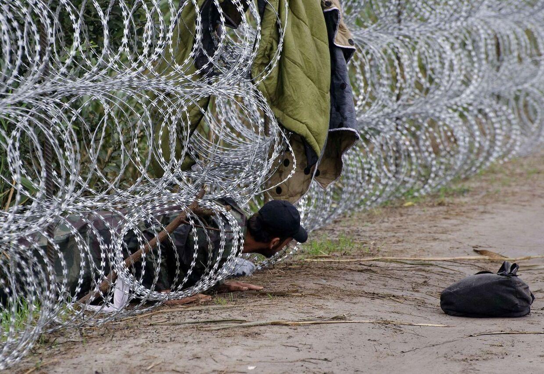En migrant kryber under et pigtrådshegn i nærheden af byen Röszke ved den serbisk-ungarske grænse. Mere end 140.000 flygtninge og migranter er kommet ind i Ungarn via Serbien alene i år. (Foto: AFP)