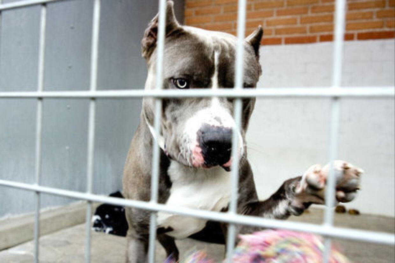 Mange hunde blev købt som den perfekte familiejulegave, men ender på internat, når interessen for den behårede julegave  forsvinder.
