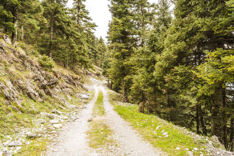 Arkiv. Den nu 45 år gamle læge er fundet i et skovområde i Toscana. Billedet er et ikke fra Toscana.