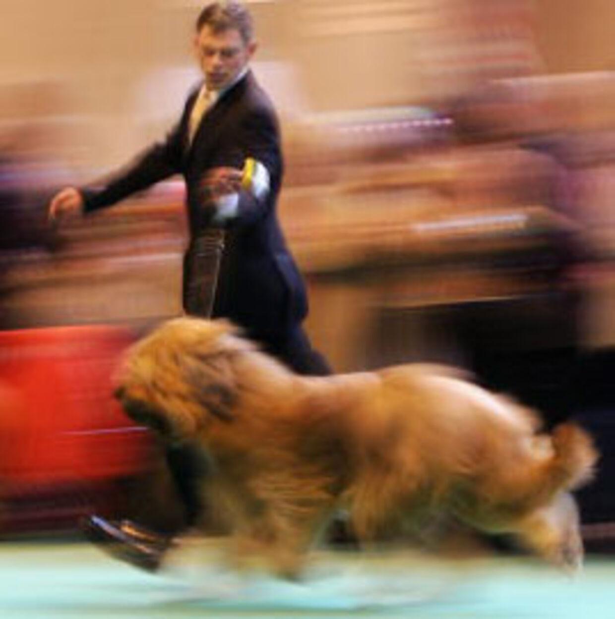 Hunden her er af Briard-typen. Arkivfoto: Gett/All Over Press