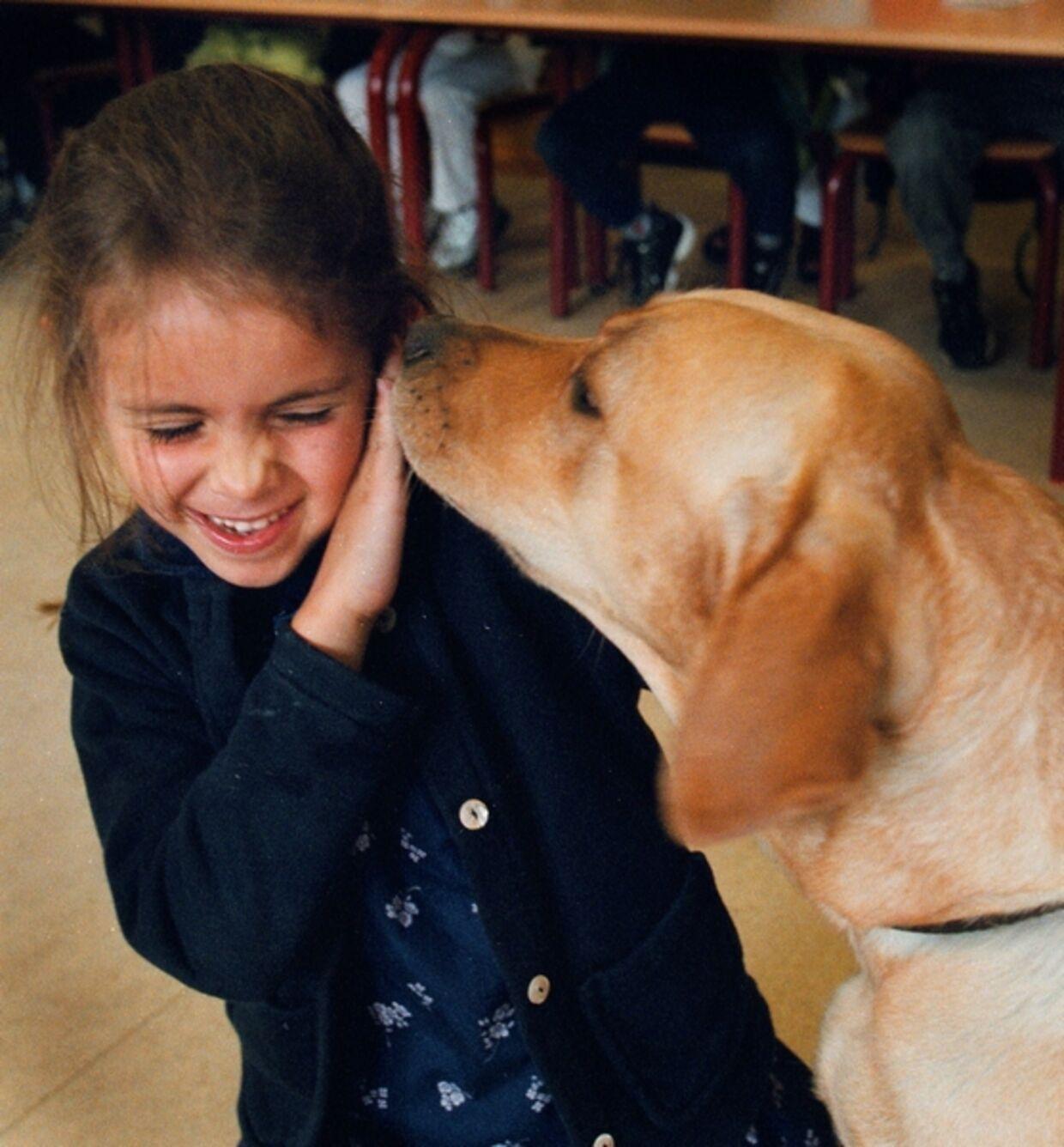 Det er vigtigt at barnet tidligt lærer at omgåes hunde. Kender barnet hundens kropssprog, er det nemmere at undgå bid.