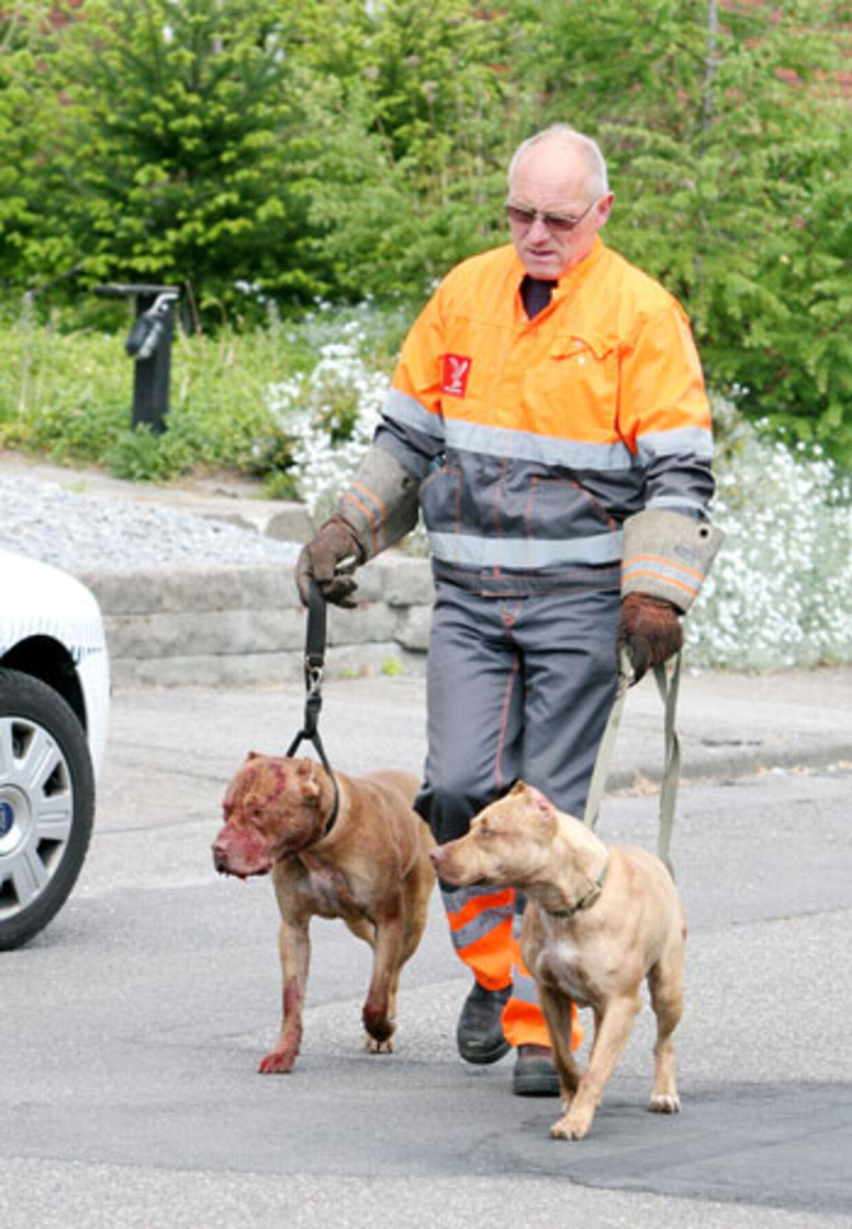De to kamphunde føres bort af politiet efter at de har overfaldet en anden hund.