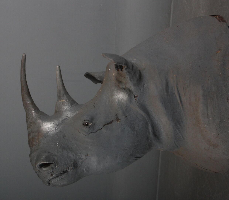 Mange af konservatorens eksotiske dyr stammer fra dyreparker i Danmark. F.eks. kommer nogle af dem fra Løveparken i Givskud. Næsehorns-trofæet blev vurderet til 5.000 kroner, men endte med at gå for næsten det dobbelte: 9.400 kroner.