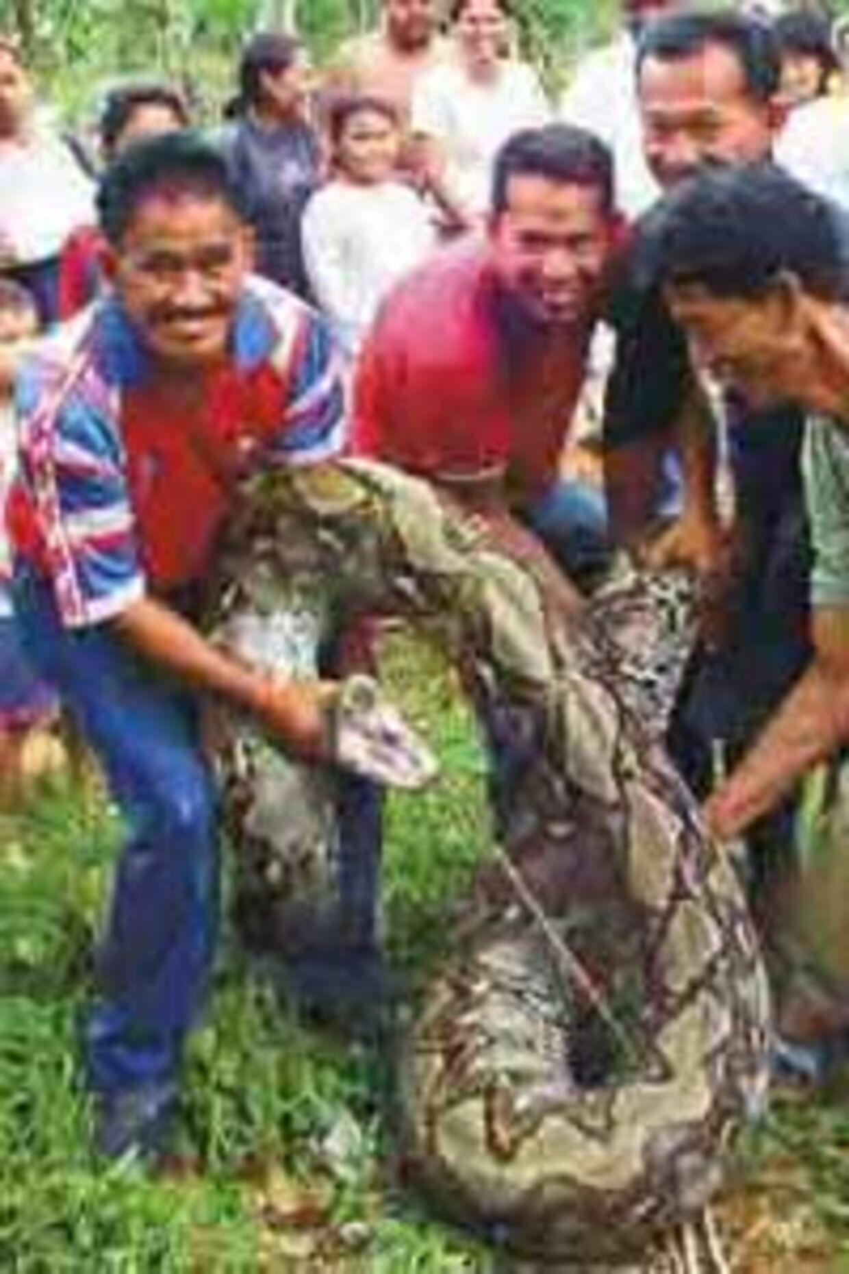 Det var en forslugen slange, landsbyboerne onsdag fangede i Malaysia.