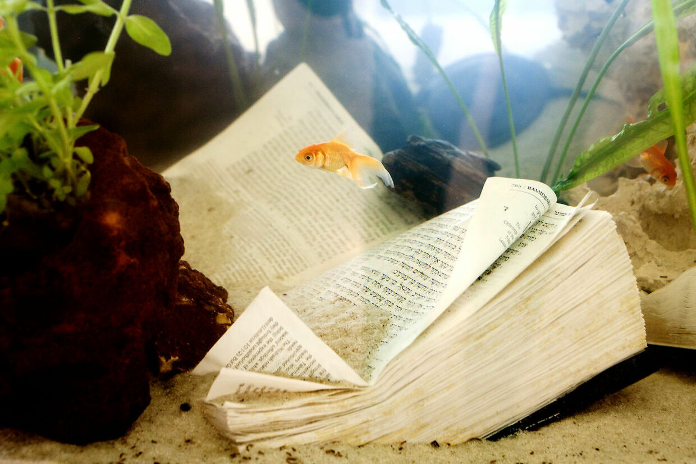 Værsgo...hellig skriftsom guldfisketoilet