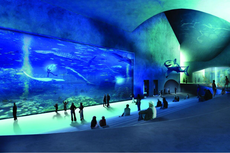 Tusindvis af havdyr fra hammerhajer til farvestrålende fisk er klar til at tage imod publikum i Danmarks nye akvarium 'Den Blå Planet', der åbner 22. marts 2013.