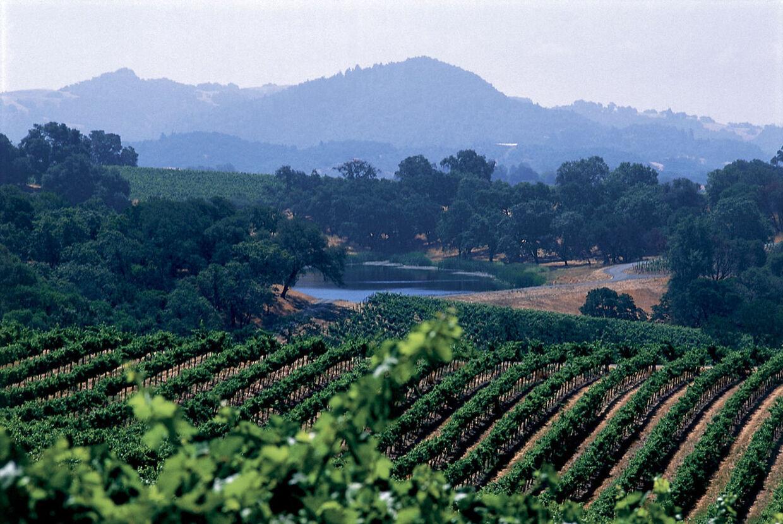Vinproducenterne i Califonien glæder sig over en 'fremragende' 2012-høst. (ARKIVFOTO fra Gallo, Californien)