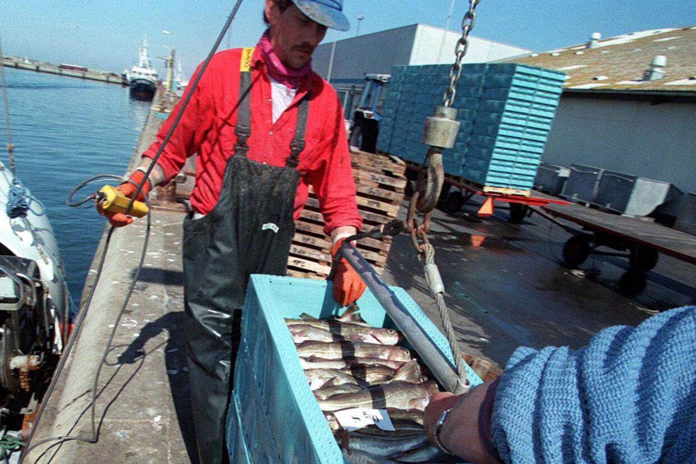 Flere tusinde ton torsk, der landes i danske fiskerihavne, er en tur omkring Kina, før de lander på danske spiseborde.