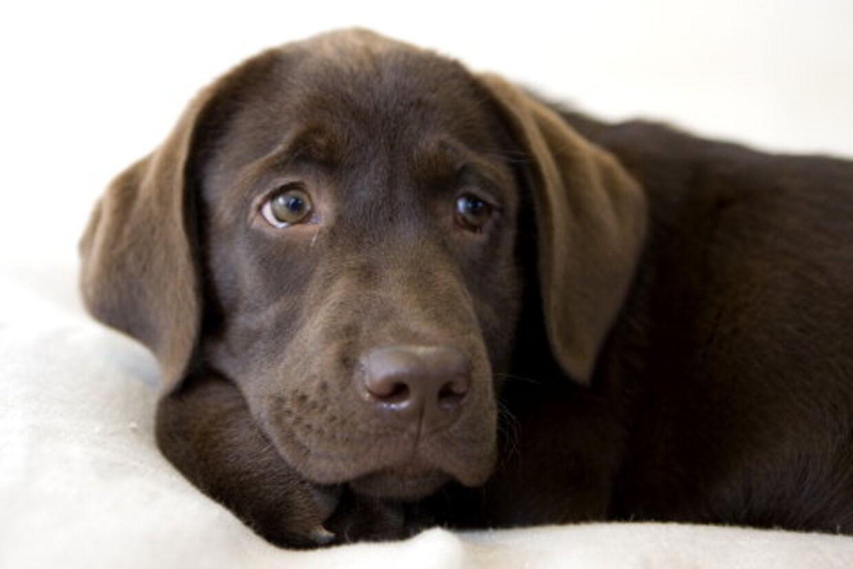 Hunde kan også blive deprimerede, og nu kan de gøre ligesom deres bedste ven, mennesket, og snuppe en prozac.