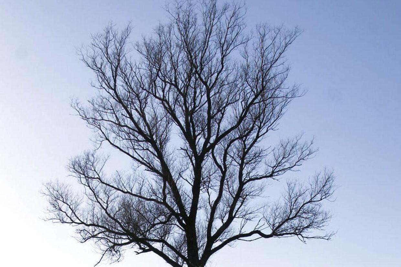 Nøgne træer uden blade ved en isdækket Esrum Sø.