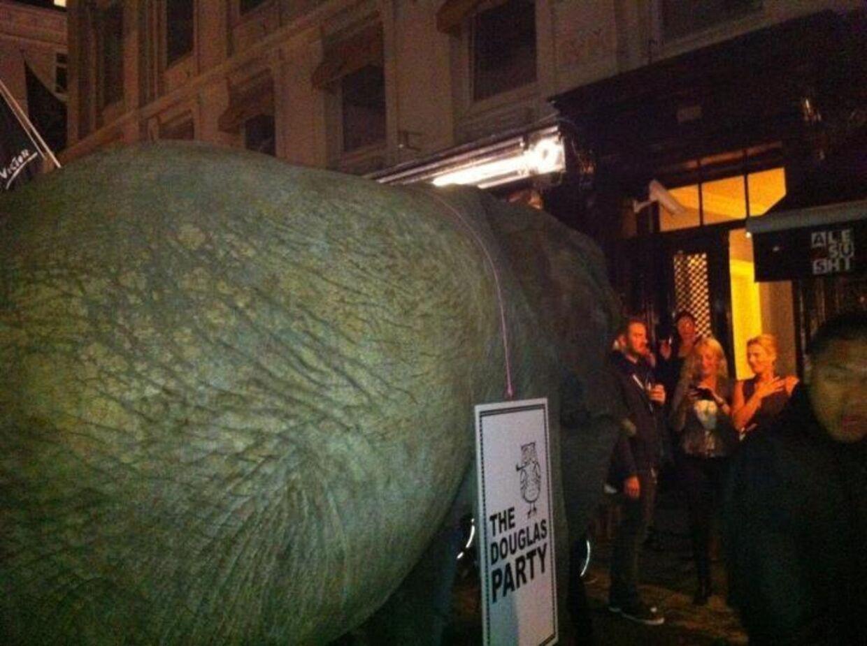 Komikeren benyttede elefanten, som er kendt for at gøre, hvad der passer den, blandt andet i Hee. Privatfoto.