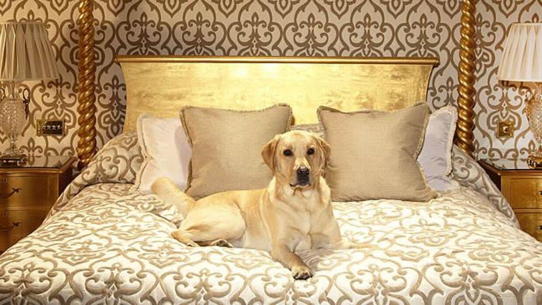 På Milestone i London er en VIP gæst en Very Important Pet.