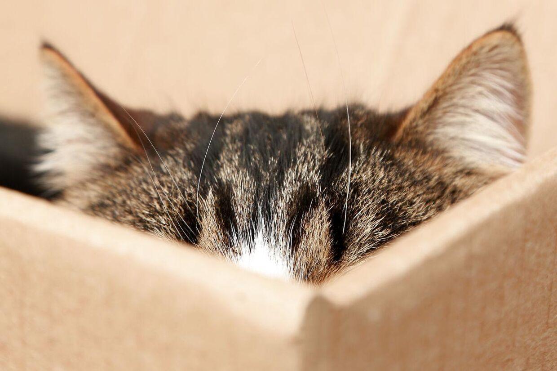 Hvis du er katteejer, kender du sikkert dette scenarie. Det er ganske normalt, og gemmesteder hjælper katten med at slappe af.