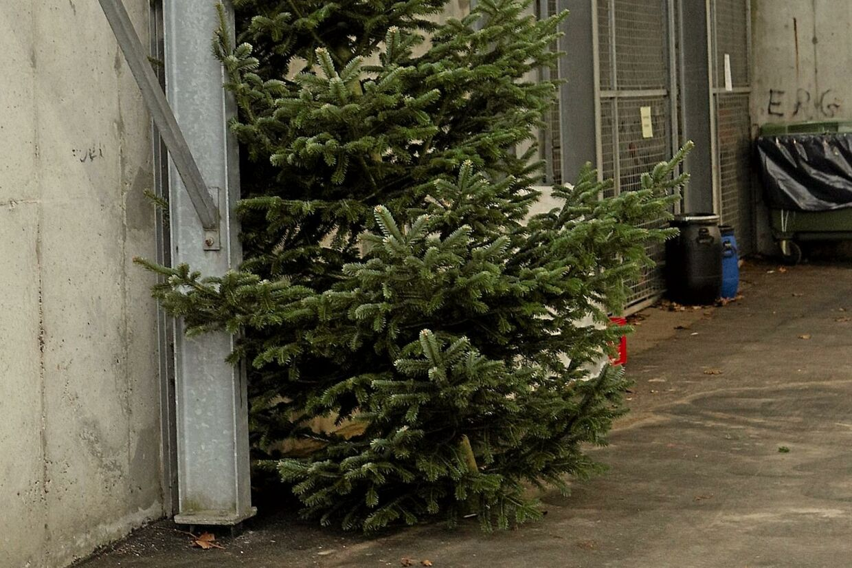 Juletræet i Egedalsvænge