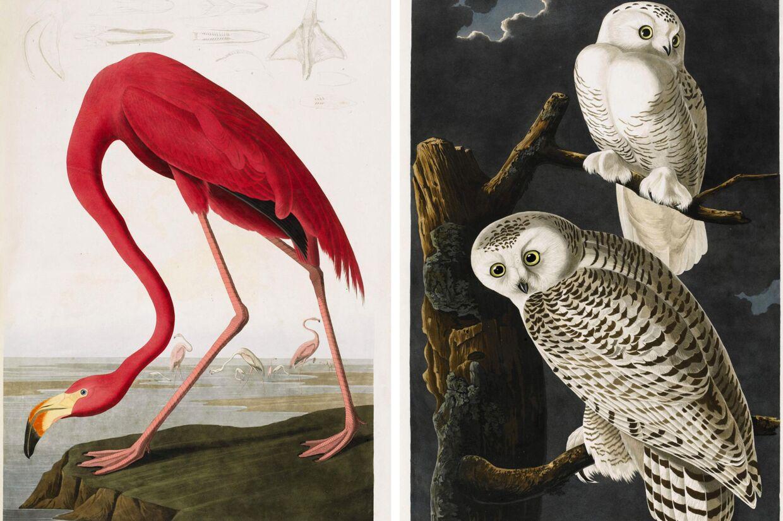 Bogen 'The Birds of America' er fra starten af 1800-tallet.