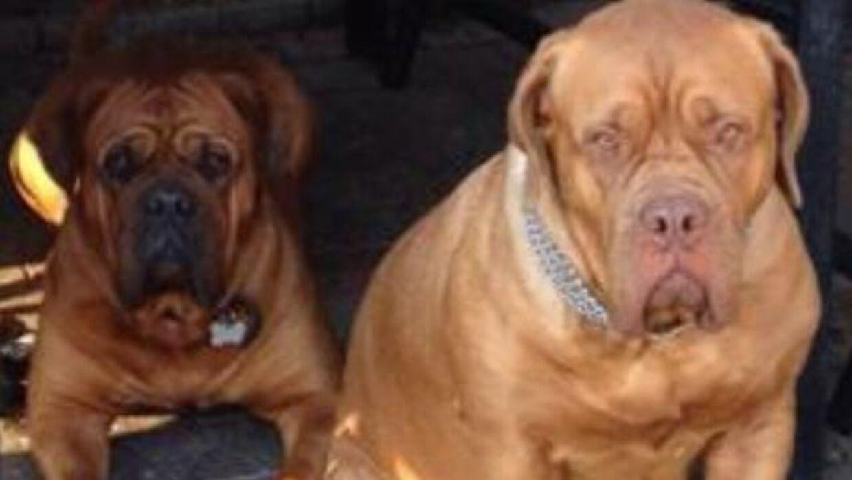 Dawn og Kala på henholdsvis to og fem år blev søndag aften bedøvede af indbrudstyve.