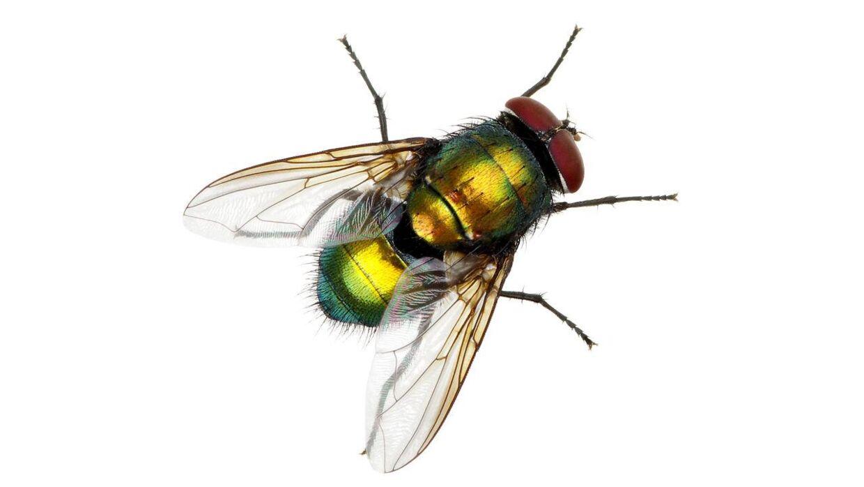 Smart Sådan slipper du af med irriterende fluer | BT Forbrug - www.bt.dk JK86