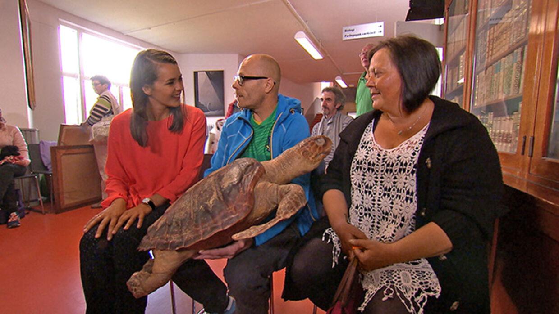 """I DR's """"Guld i Købstæderne"""" bliver der vurderet alt lige fra kæmpe skildpadder til lysestager og meget andet spændende fra folks gemmer. Foto: DR"""