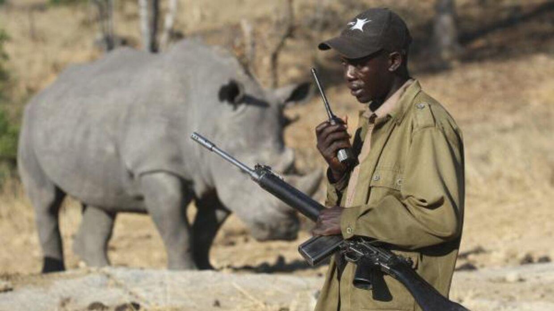 En parkvagt ses foran et næsehorn.