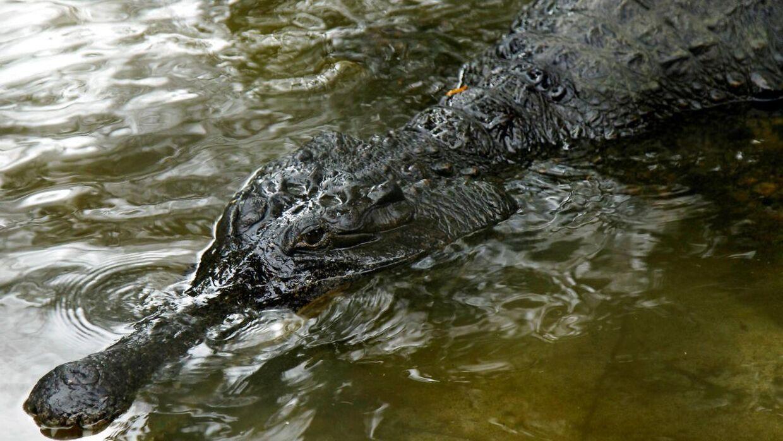 En krokodille angreb og dræbte en 19-årig fodboldspiller.