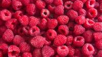 Bær tilbagekaldes - kan give roskildesyge
