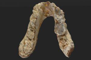 Den 7,175 millioner år gamle Graecopithecus-kæbe, som forskere mener stammer fra et fortidsmenneske, der stammer fra Europa. Det kan betyde at menneskehedens historie skal skrives om.