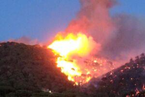 En skovbrand er brudt ud i det sydlige Frankrig tæt på Saint Tropez.