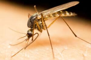 Pas på når du rejser til det sydøstlige Asien - her er fare for at blive stukket af malaria myg.