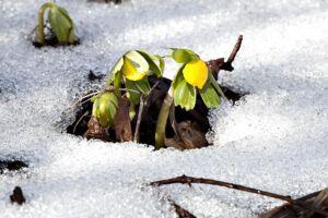 Foråret er ikke på vej.