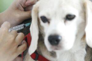 Her bliver en hund vaccineret mod rabies i Thailand. (Arkivfoto/Scanpix)