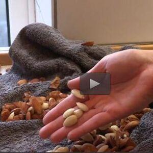 hvordan smutter man mandler
