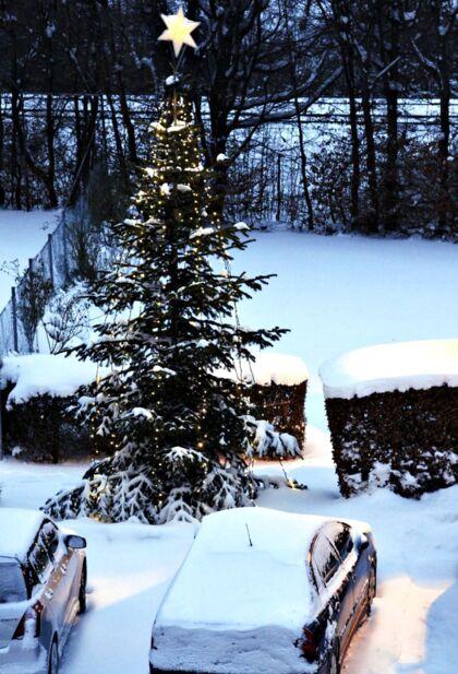 Hvid jul igen. Juletræ i sneen fredag morgen den 24. december 2010 på Frederiksberg. Hvid jul hører til sjældenhederne i Danmark. Siden 1900 er det kun sket otte gange, hvoraf den ene var julen 2009. Med en gentagelse i år er det første gang, så længe nogen kan huske tilbage, at vi får en landsdækkende hvid jul to år i træk.